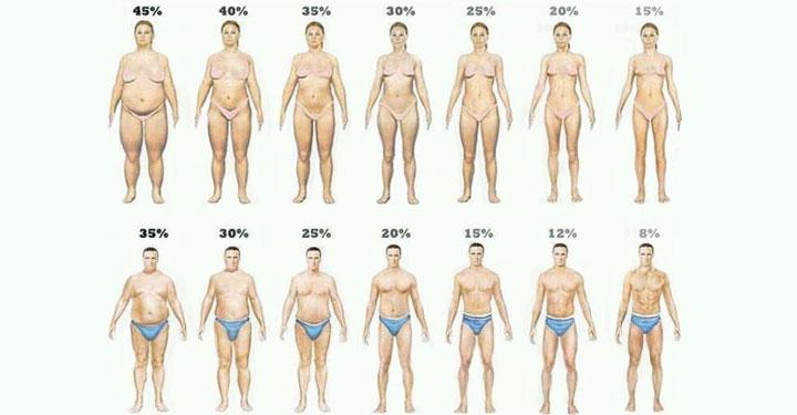 vücut yağ oranı