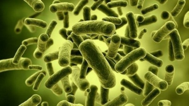 fat-fighting-microbes-new-study-backs-gm-probiotic-to-supress-obesity_strict_xxl